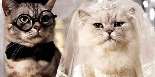 На Годовщину Свадьбы