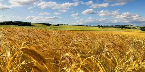 Сценарии ко Дню сельского хозяйства